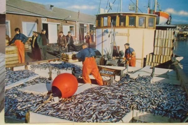 Fiskesäkerhetskurs
